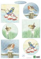 Tiny's Birds in Winter
